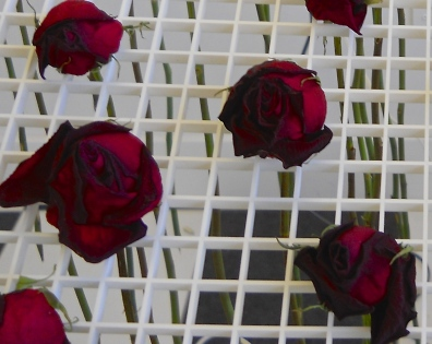 dried roses in installation after 14 days