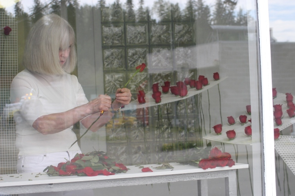 cleaning roses in studio window