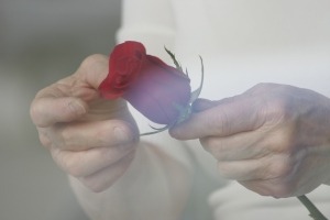 cleaning a rose