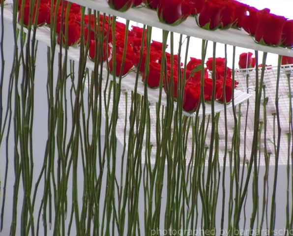 detail of installation seeing roses through the stems