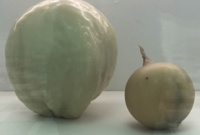 cabbage, onion encased in wax