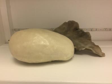 wax encased potato