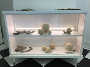 cabinet with wax preserved specimens