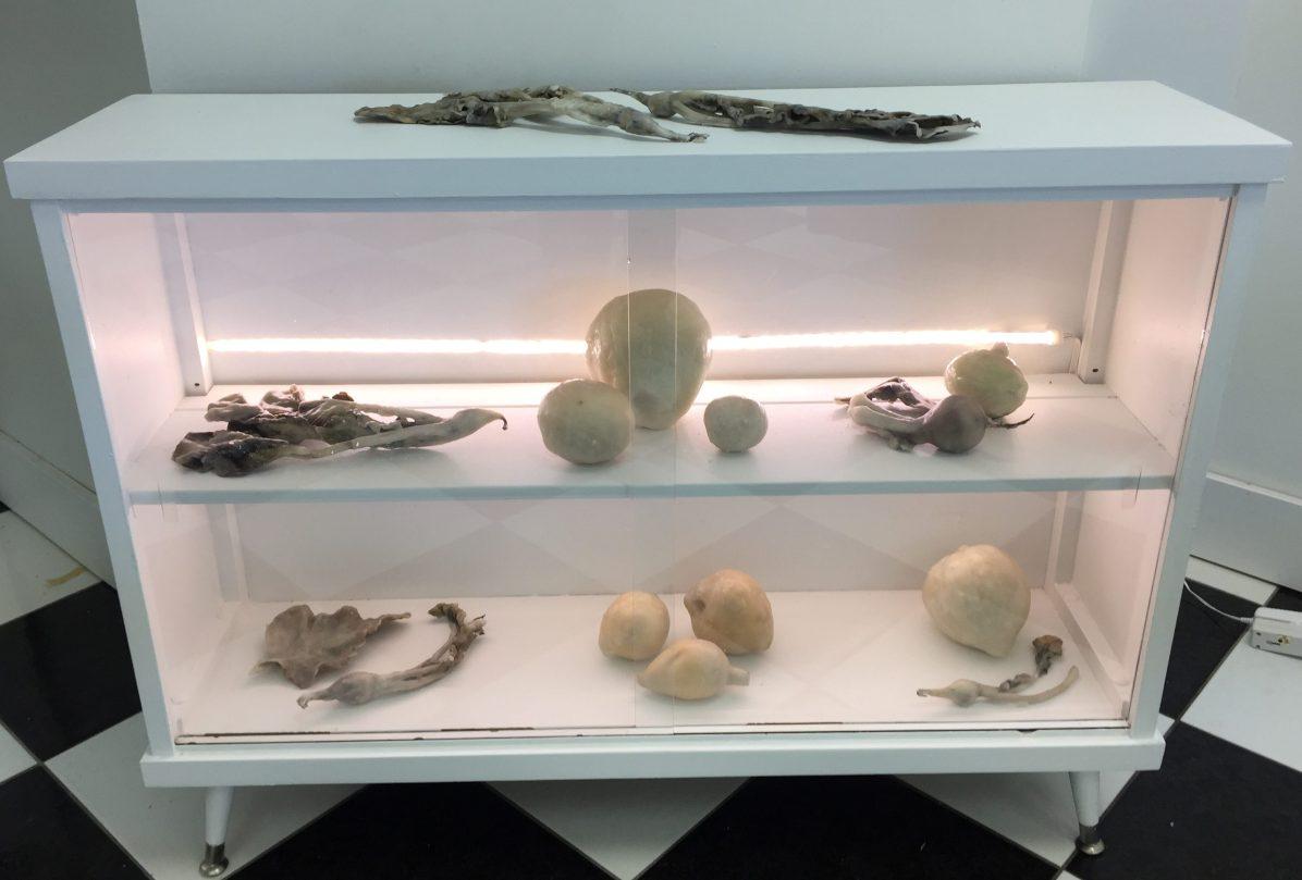 Preserved: specimens