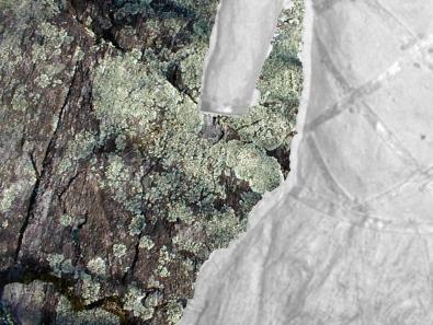 ancestor dress & granite