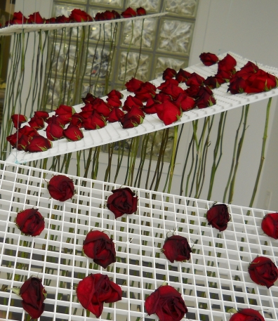 day 7 installation detail, roses wilting