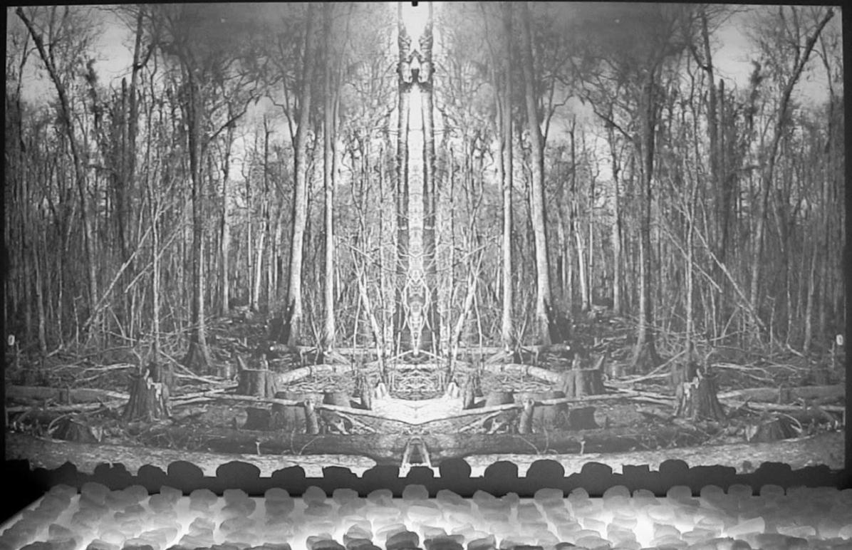 cast wax potato skins on a lighted platform, forest video